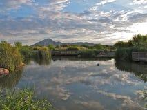 Reflexionen, Clark County Wetlands Park, Las Vegas, Nevada stockfoto
