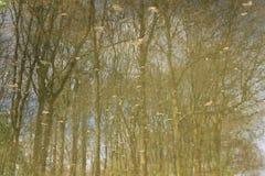 Reflexionen der Bäume im See Lizenzfreies Stockbild