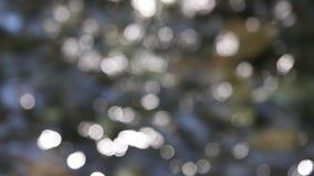 Reflexionen des Lichtes und der Blätter auf dem Wasser stock footage