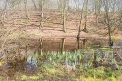 Reflexionen in einem ruhigen Teich stockbild