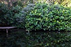 Reflexionen in einem Teich Lizenzfreie Stockfotos