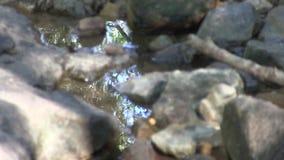 Reflexionen i vatten bland vaggar arkivfilmer