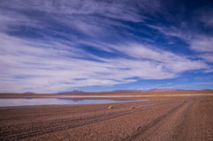 Reflexionen im altiplano, Bolivien stockbild