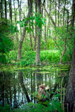 Reflexionen im Fluss Lizenzfreies Stockbild