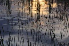 Reflexionen im Wasser Lizenzfreie Stockfotografie
