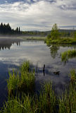 Reflexionen im Wasser des Sumpfes stockbilder
