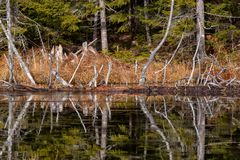 Reflexionen von Bäumen auf einem eisigen Teich in Maine lizenzfreies stockfoto