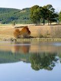 Reflexionen von Bäumen und von Ackerland im Herbst im die Drachenberge-Gebirgszug bei Underberg in Südafrika Stockfoto