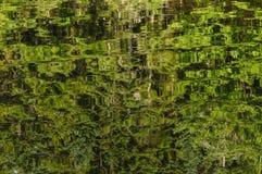 Reflexionen von Forest On Cedar Lake In das Adirondack Mountai Lizenzfreie Stockfotos