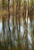 reflexioner Arkivbilder
