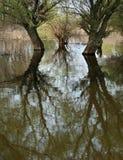 reflexioner Royaltyfri Fotografi