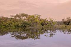 Reflexioner av exotiska träd i vattnet arkivfoton