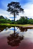 Reflexioner av Laos. Träd. Royaltyfri Foto