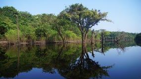 Reflexioner av träd i floden på regnskogen i Amazonas, Brasilien Arkivbild