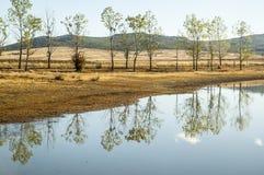 Reflexioner av träd i sjön Arkivfoton