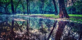 Reflexioner av träd i vatten Arkivbild