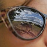 Reflexioner av två hästar i exponeringsglasen av en ung kvinna Royaltyfri Fotografi