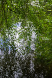 Reflexioner för tårpilträd på en sjö royaltyfri bild