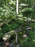 Reflexioner i The Creek Royaltyfri Foto