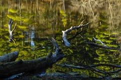 Reflexioner i det Delegan dammet, läger Saratoga, Wilton Park And Preserve, New York USA royaltyfria bilder