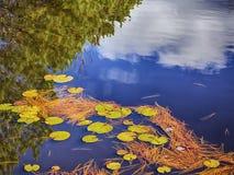 Reflexioner i ett litet liljadamm Royaltyfri Fotografi