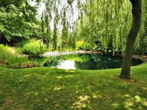 Reflexioner i ett trädgårds- damm med ett tårpilträd royaltyfri foto