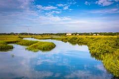 Reflexioner i ett träsk i St Augustine, Florida Arkivfoton