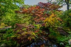 Reflexioner i färgrika Japenese arbeta i trädgården i Clingendael, Haag, Nederländerna royaltyfria foton