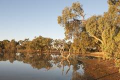 Reflexioner i lagun för en vildmark Royaltyfria Bilder