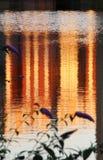 Reflexioner i vatten Arkivbild