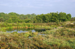 Reflexioner på Heath Pond fotografering för bildbyråer