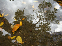 Reflexioner på vatten arkivbild