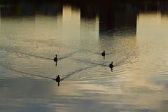 Reflexiones Imagen de archivo libre de regalías