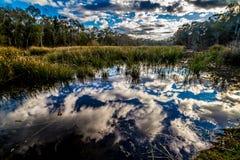 Las reflexiones asombrosas en el pantanoso todavía riegan del lago Creekfield. Imagen de archivo