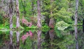 Reflexiones Charleston South Carolina del agua de Spirea de las azaleas Imagen de archivo libre de regalías
