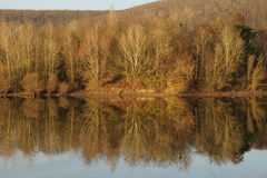 Reflexiones de árboles en luz del invierno Foto de archivo