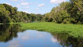 Reflexiones de Astor Florida St Johns River Imágenes de archivo libres de regalías