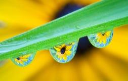 Reflexiones de la flor Imagen de archivo libre de regalías