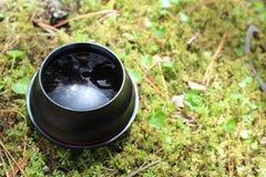 Reflexiones de la lente de la primavera fotografía de archivo libre de regalías