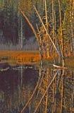 Reflexiones de la naturaleza Imagen de archivo