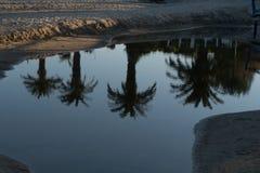 Reflexiones de la palma en el agua foto de archivo