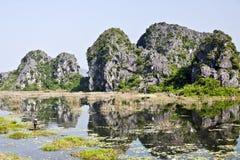 Reflexiones de las reservas de naturaleza de Van Long Fotografía de archivo libre de regalías