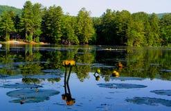 Reflexiones de Vanare del lago Imagen de archivo