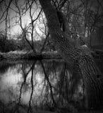 Reflexiones del árbol Foto de archivo libre de regalías