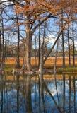 Reflexiones del árbol de Cypress Fotos de archivo libres de regalías