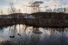 Reflexiones del árbol en la puesta del sol en una charca en Colfiorito Umbría, ingenio Fotos de archivo libres de regalías