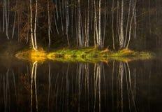 Reflexiones del agua del abedul del otoño Imagen de archivo libre de regalías