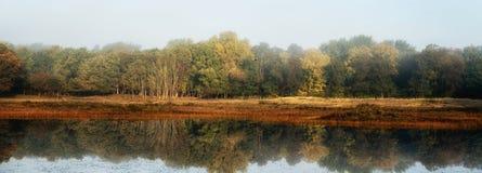 Reflexiones del bosque Fotografía de archivo libre de regalías