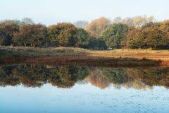 Reflexiones del bosque Foto de archivo libre de regalías