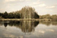 Reflexiones del bosque del abedul y del pino en el agua del río Fotografía de archivo libre de regalías
